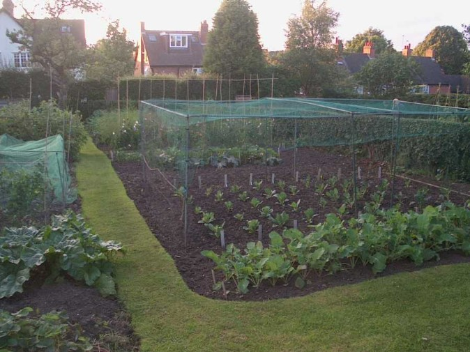 Allotments MP